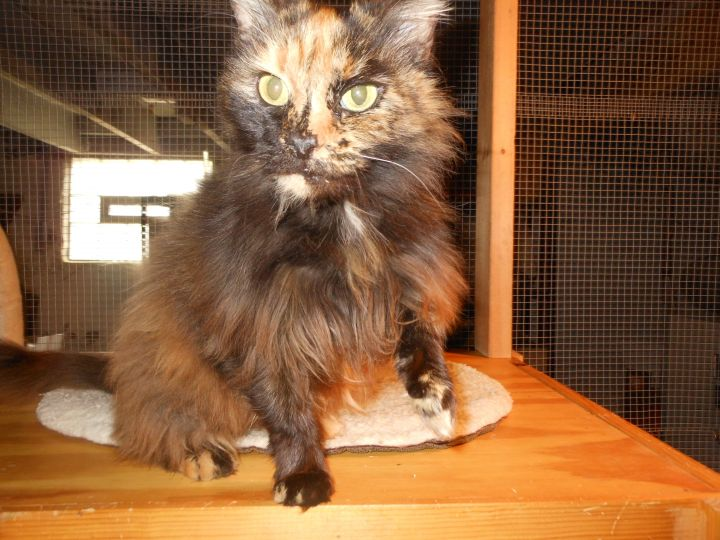 Miss Lucy-Reduced Adoption Fee 4
