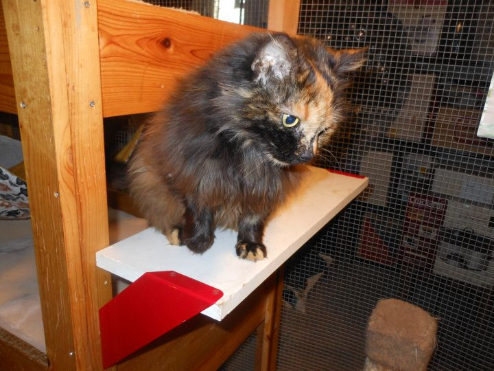 Miss Lucy-Reduced Adoption Fee 5