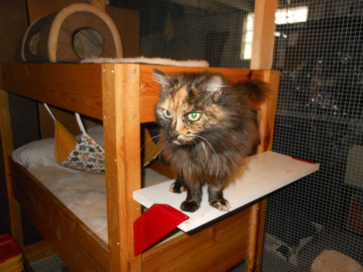 Miss Lucy-Reduced Adoption Fee 6