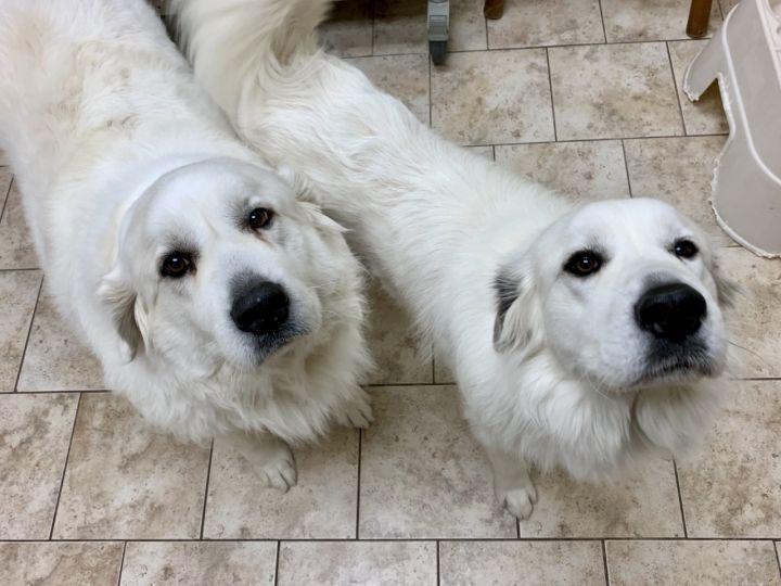 Rosie & Ophie 1