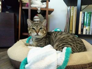 While I was living in a feral colony I had some health issues The colony caretaker knew I was fri
