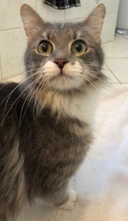 Maisey-at the Adoption Center 2