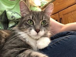 Maisey-at the Adoption Center 4
