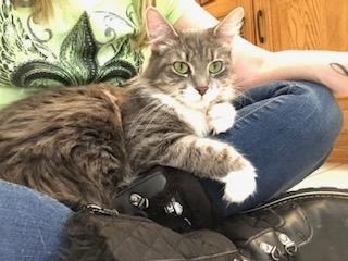 Maisey-at the Adoption Center 5