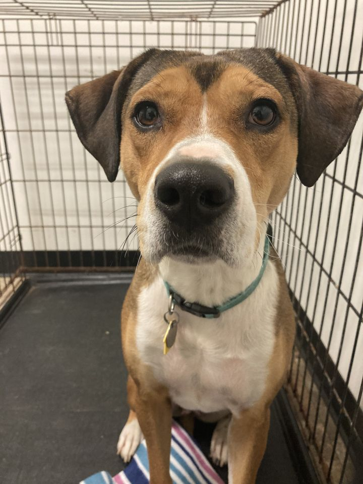 Jenny, an adoptable Hound Mix in Spencer, IN