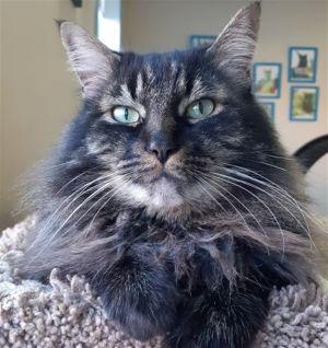 ?bust=1584478553&width=300 - Adopt a Cat