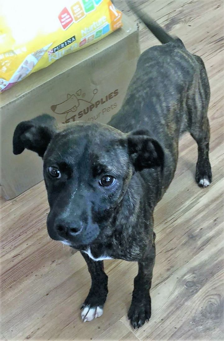 Joy, an adopted Mixed Breed in Northwood, NH