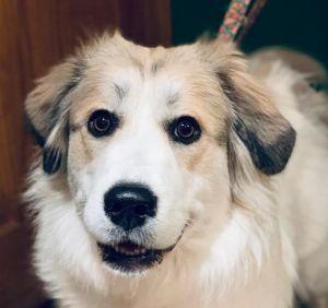 Aurora - Adoption Pending!