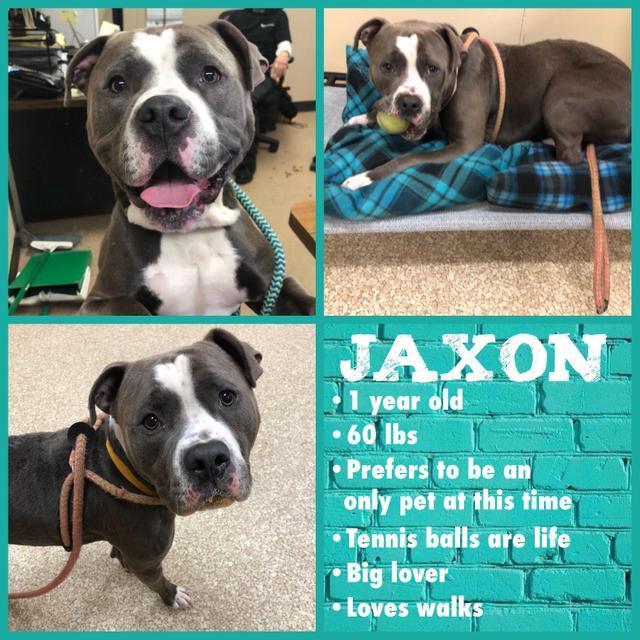 Jaxon 2