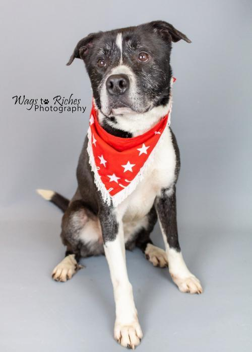 Grey, an adopted Mixed Breed in Anniston, AL