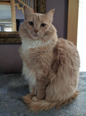 ***COURTESY LISTING*** Millie