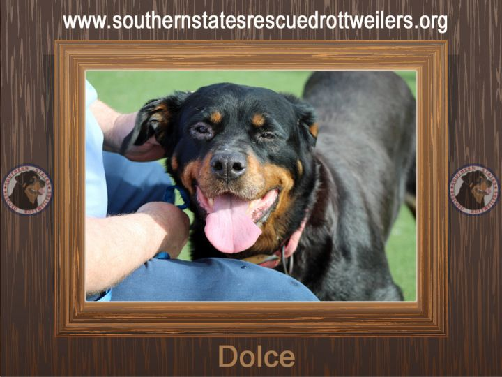 Dolce, an adoptable Rottweiler in Poplar Branch, NC