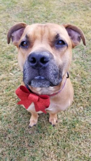 Buck is a 3 year old crate trained always happy type of dog He has a loving pe