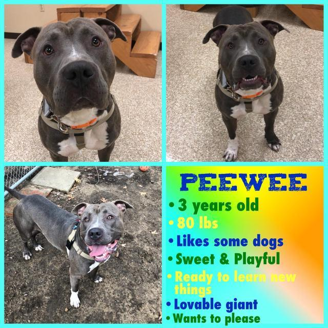 PeeWee 3