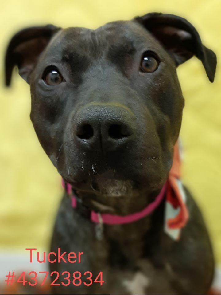 Tucker 1