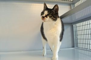 Lori is a 5 year old spayed female Lori loves attention  affection on her terms of course She doe