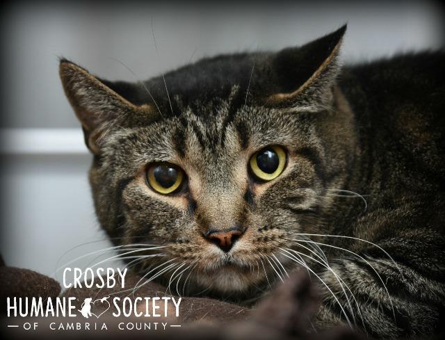Crosby 1