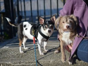 You can fill out an adoption application online on our official websiteLily and Thomas are a bonded