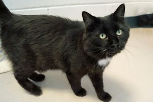 Felicia came to us because she was living in an overly crowded home She is very shy but with time