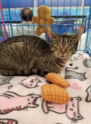 Trix along with her six babies came to us from the Bronx All of her babies were adopted and now