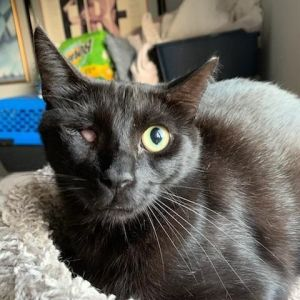 Young Black BeautySable is approximately 2 years old and a black beauty who is F