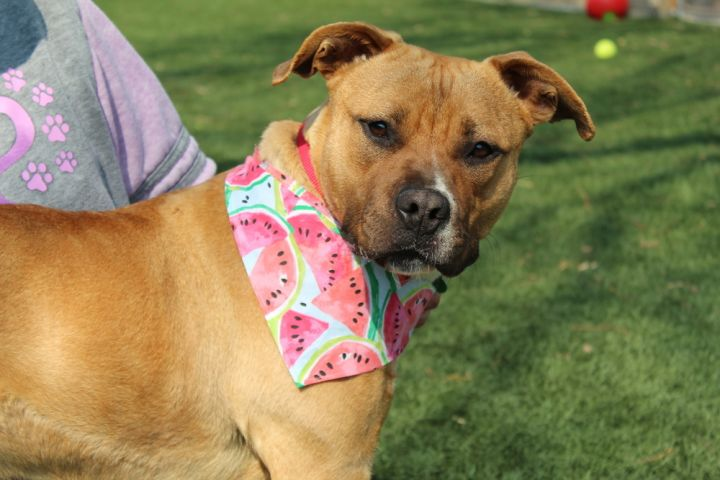 Honey (Fostered in Omaha) 4