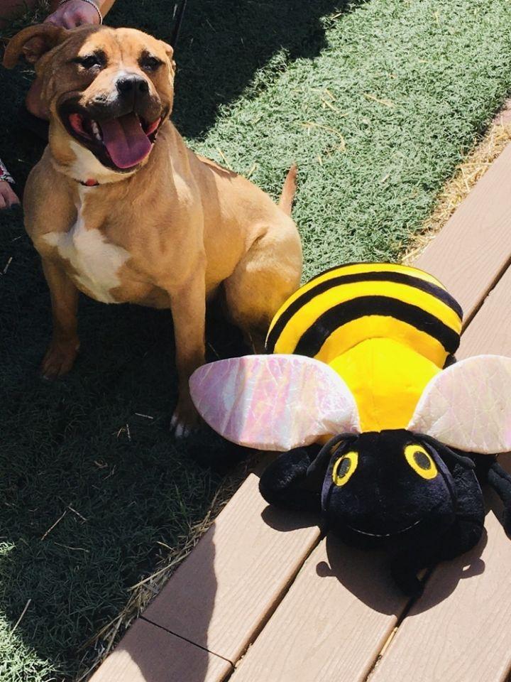 Honey (Fostered in Omaha) 3