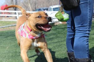 Honey (Fostered in Omaha)