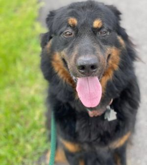 Meet Apollo This handsome fluff was a shelter favorite He had been in the shelter for MONTHS and e