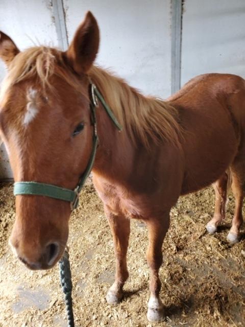Wizard, an adoptable Quarterhorse in Brenham, TX