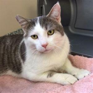 ?bust=1586356847&width=300 - Adopt a Cat