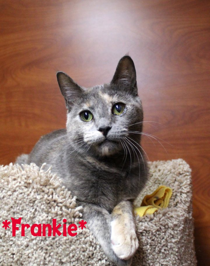 Frankie 2