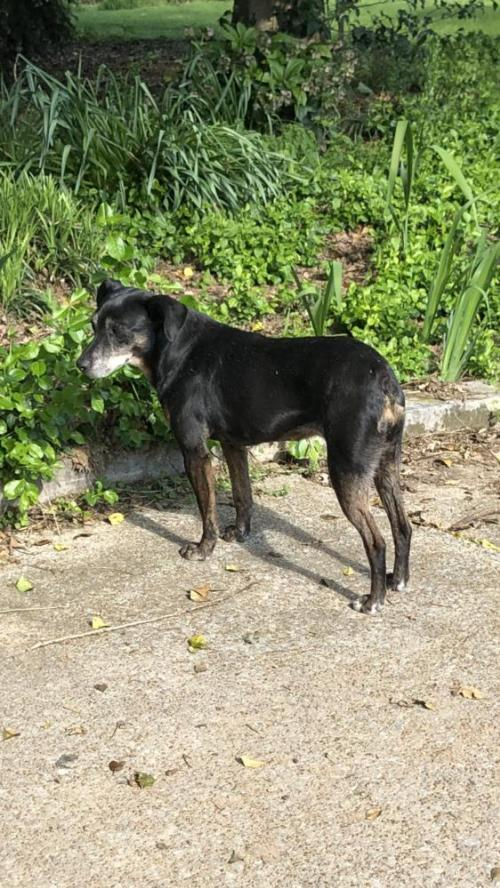 Dog For Adoption Patty The Patterdale A Patterdale Terrier Fell Terrier In Columbia Tn