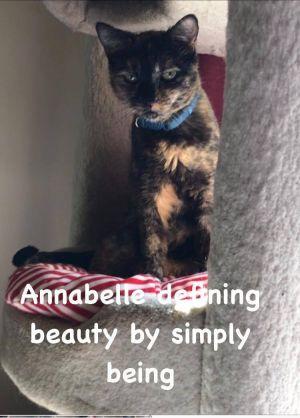 Annabelle Tortoiseshell Cat