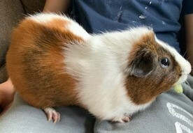 Simon and Fatty Chatty 2