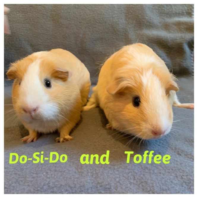 Do-Si-Doe & Toffee