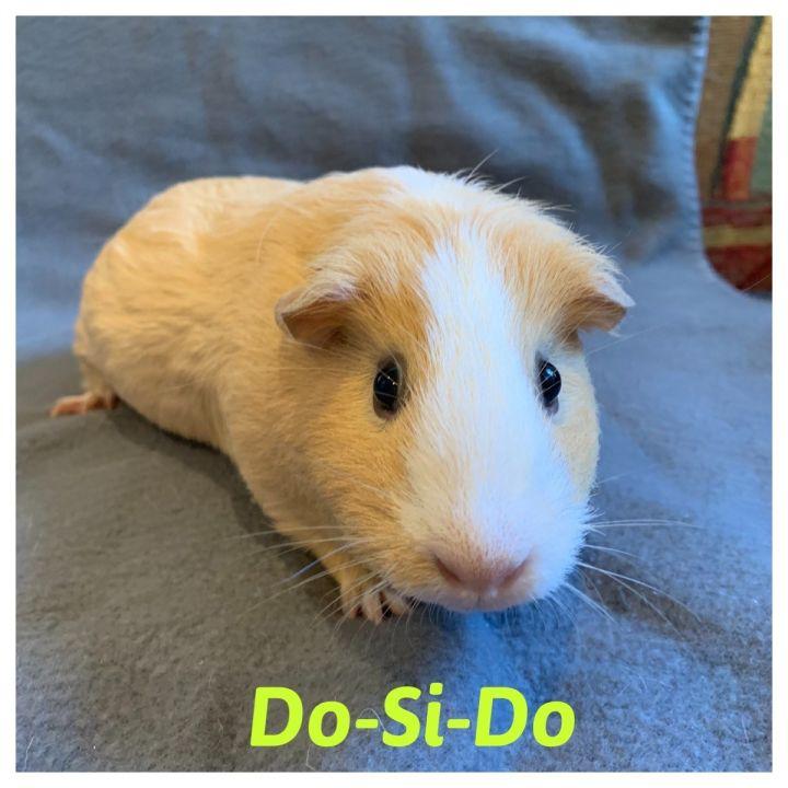 Do-Si-Doe & Toffee 2