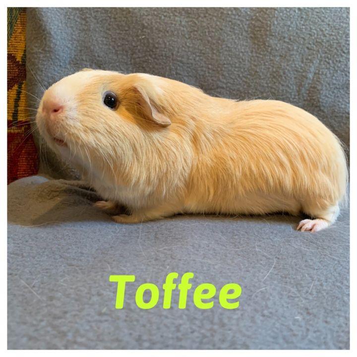 Do-Si-Doe & Toffee 3