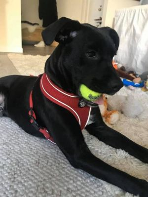 You can fill out an adoption application online on our official website Meet Ryland Ryland is a La