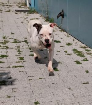 Due to COVID-19 All of our adoptable animals are now in foster homes Our Adoption Center in no lon
