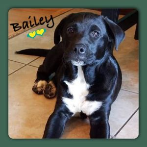 You can fill out an adoption application online on our official websiteMeet Bailey born into rescu