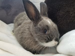 Sunny was rescued from a shelter with his mother and older sibling When he was only four weeks old