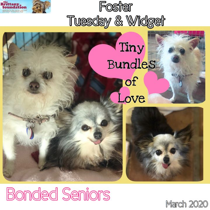 Tuesday (Bonded with Widget) 3