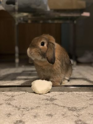 Thumper born in November of 2018 is a total catch Hes very sweet and has a loving personality H