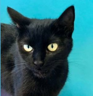 AJ is the best If you are looking for a cat that wants to be with you and some