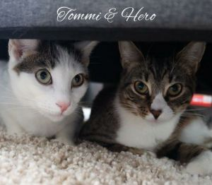 Hero and Tommi are sweet young sister and brother Theyre SUPER SWEET curious playful and loving