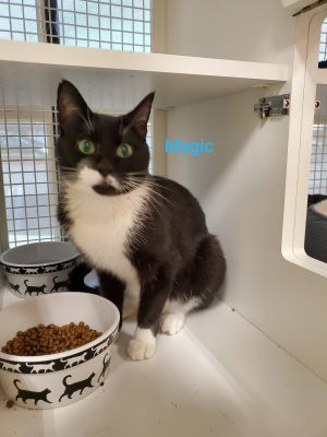 Magick is a 2 year old cat with beautiful green eyes She was part of a group of related cats