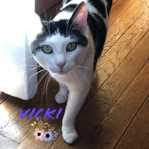 Vicki is a gentle beautiful cat with such a sweet personality She has completely thrived in her l