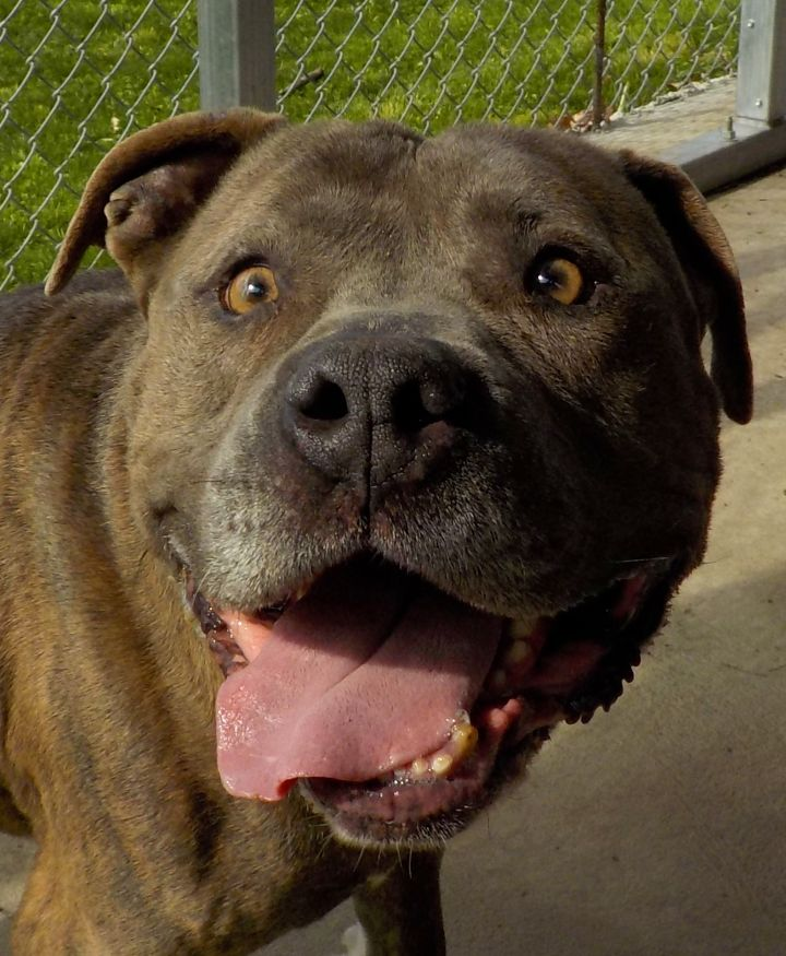 Tanker - A1 - ADOPTED 3