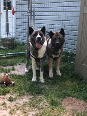 Bonded Pair  Joe / Cindie